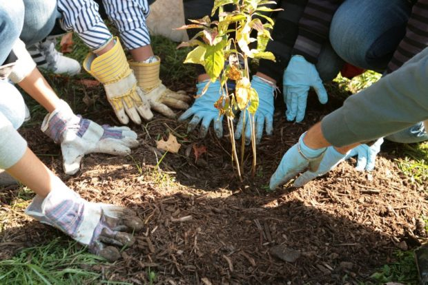 tree-planting-school